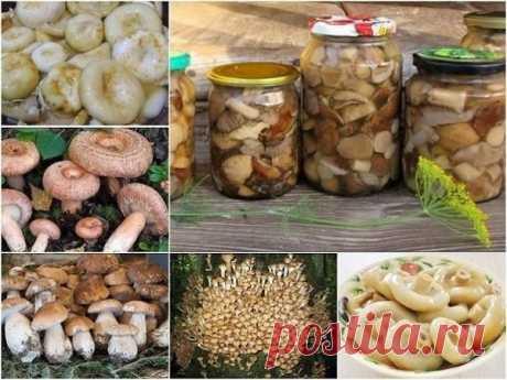 Универсальный маринад для большинства грибов - Перспектива — LiveJournal
