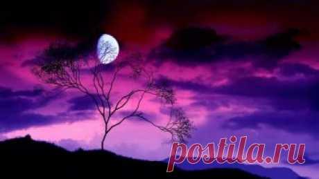 Лунная ночь .