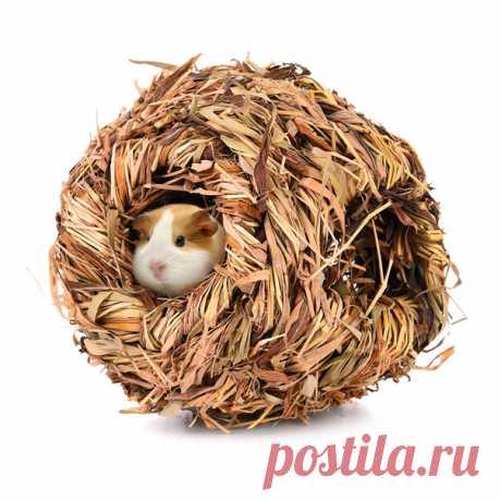 Гнездо для хомяка удобная и мягкая травяная комнатка, и отдохнуть, и погрызть можно вашему хомячку точно понравится  посмотреть и выбрать: https://vk.cc/afbmdw  #АлиНаходка для питомца