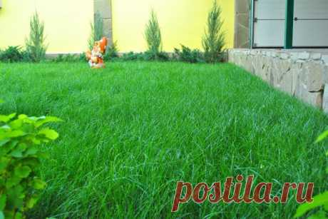Как посеять газон-траву на дачном участке