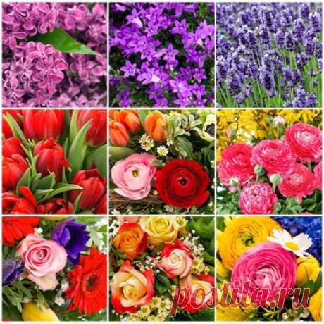 Весенние цветы — сбор пазла — Пазлы онлайн