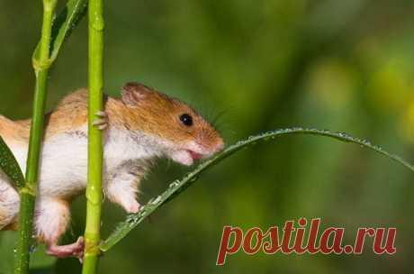 Полевые мышки в фотопроекте Jean-Louis Klein и Marie-Luce Hubert — Фотошедевры