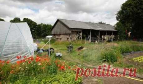 10 секретов отменного урожая огурцов | На грядке (Огород.ru)