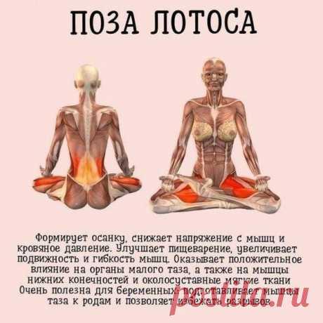 Для здорового тела подборка упражнений из йоги