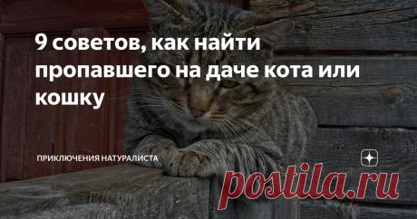 9 советов, как найти пропавшего на даче кота или кошку