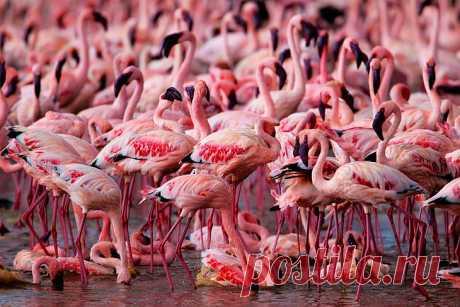 Страна розовых фламинго: luyssi70