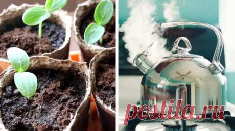 Один из самых быстрых и простых способов высевания семян – это посадка в кипяток. Кому-то он может показаться странным, однако результат порадует – всходы появятся быстро, растения сразу пустятся в рост, не будут задерживаться в развитии и болеть