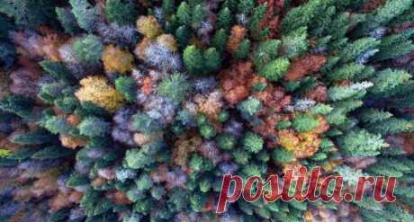 Фото дня: фантастические краски осени