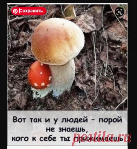 proxy.imgsmail.ru (300×370)