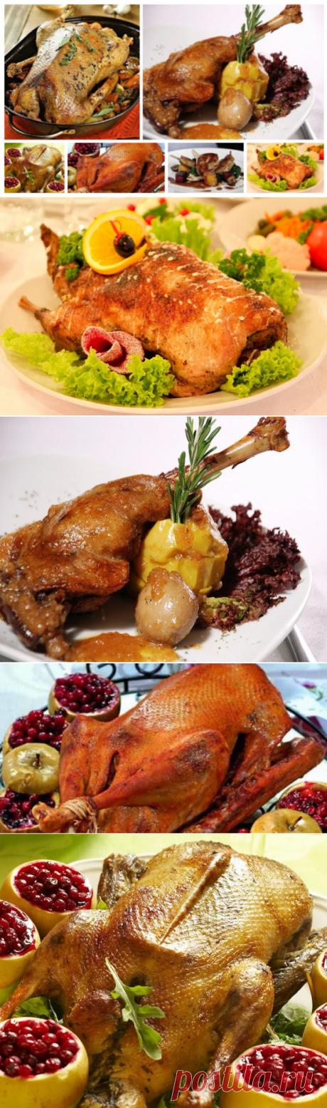 Готовим гуся на праздники: 11 рецептов