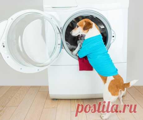 Как избежать поломки стиральной машины: 15 полезных советов   Клуб DNS   Яндекс Дзен