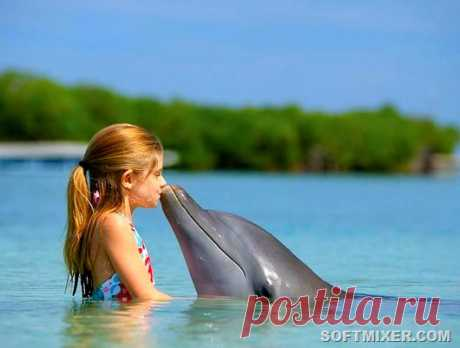 The surprising facts about dolphins