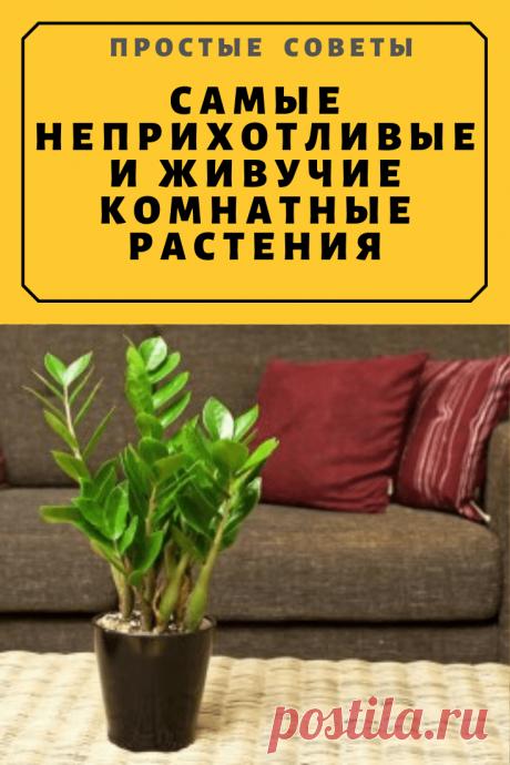 Самые неприхотливые и живучие комнатные растения — Простые советы