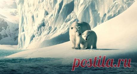 Лучшие зарубежные документальные фильмы про планету Земля | Интересное кино | Яндекс Дзен