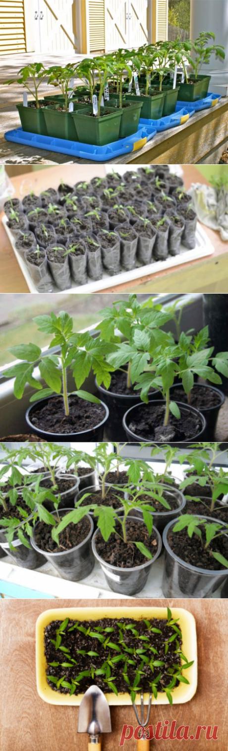 Рассада томатов на наполнителе с добавлением чайной заварки: плюсы и минусы