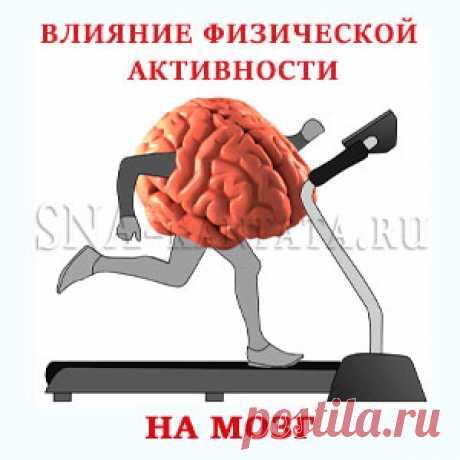 Влияние физической активности на мозг и когнитивные функции