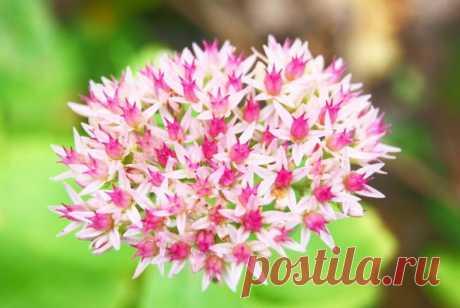 """Виды цветов, которые способны вытеснить сорняки   Журнал """"JK"""" Джей Кей Любой ухоженный газон и клумбу могут испортить сорняки. Они не только ухудшают внешний вид, но и забирают на себя полезные"""