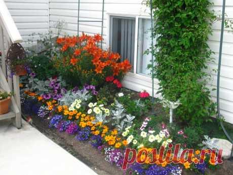 """""""Ленивый"""" сад: какие неприхотливые цветы посадить"""
