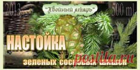 Настойка зеленых сосновых шишек от кашля - Хвойный лекарь