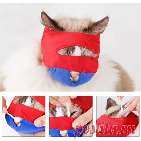Что будет с кошкой, если прицепить на холку прищепку. Рассказываю зачем это делают ветеринары и 2 вариант   Торшина - путешественница   Яндекс Дзен