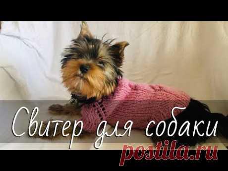 Свитер для собаки спицами. Простой свитер-реглан с косами для йорка. Подробный МК. Dogs sweater.