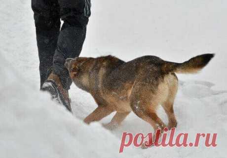 Нападение собак: как сохранить жизнь и здоровье