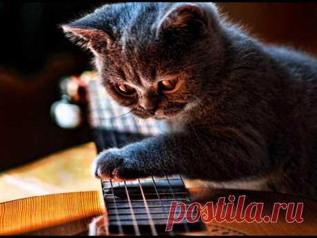 Гитарист-виртуоз:)