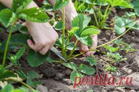 30 дел, которые надо сделать в саду, огороде и цветнике в мае   Новости (Огород.ru)