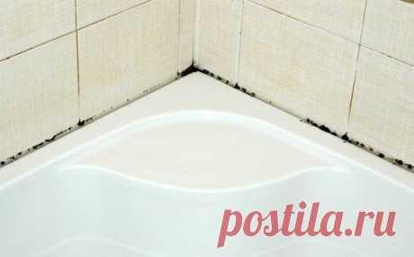 Простое средство от грибка в ванной | полезные советы | Постила