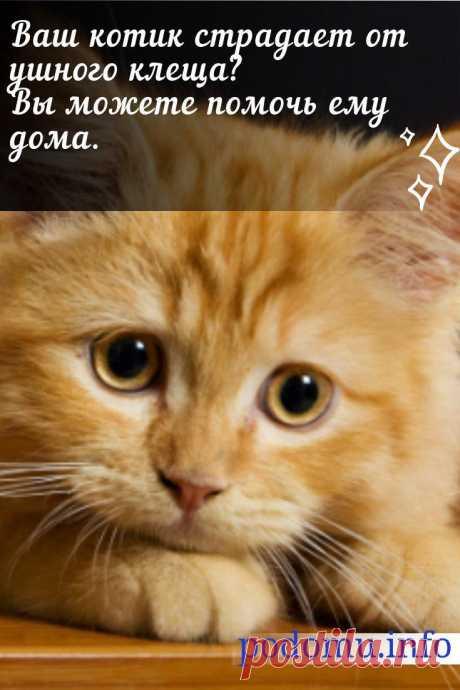 Лечение ушного клеща у кошек: эффективные препараты в домашних условиях #котик#кот#лечениекота#ушнойклещукотов#болезникошек#ветеренария