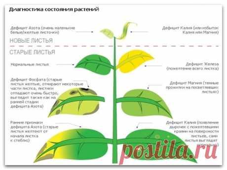 Шпаргалка. Диагностика coстояния растений