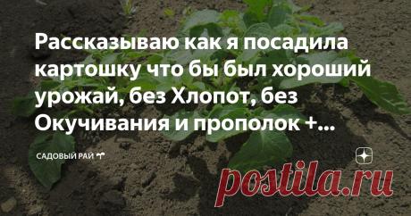 Рассказываю как я посадила картошку что бы был хороший урожай, без Хлопот, без Окучивания и прополок + Видео