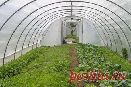 Когда высаживать овощные культуры в необогреваемую теплицу — 6 соток