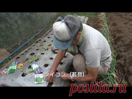 ファミリー農園180920秋野菜への切り替え - YouTube