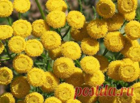Растения, которые помогут прогнать мышей с вашего огорода / Домоседы