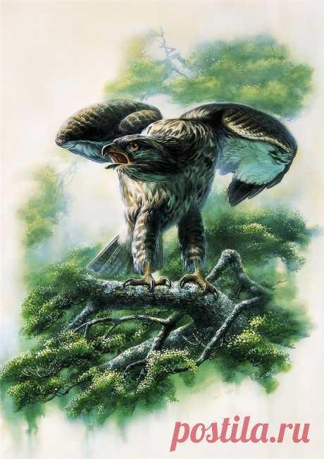 Птицы китайского художника Zeng Xiao Lian