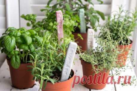 Идеи, которые сделают сад уютнее и облегчат уход за растениями