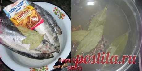 La receta del salazón del arenque en las condiciones de casa, la saladura del arenque en las condiciones de casa