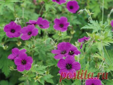 Цветы-целители: домашние растения убивают микробы, очищают воздух и успокаивают нервы Домашние растения – это не только предмет интерьера или модное хобби, но и источник здоровья и позитивной