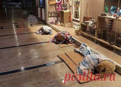Вот как управляющие магазинов позаботились о бездомных животных после невиданной снежной бури в Стамбуле.
