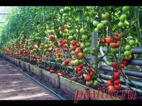 Метод доктора Миттлайдера. Технология изобилия урожая (по методу Миттлайдера) 1