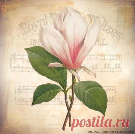 Винтажные принты с цветами и нотами
