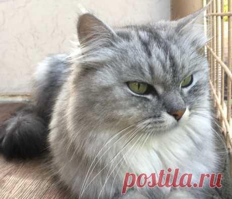 Сколько раз в день следует кормить кошку | Мой обожаемый кот | Яндекс Дзен