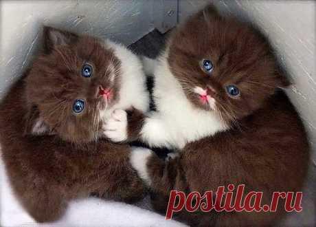 Шоколадки :) Эти забавные животные: Шоколадки :)