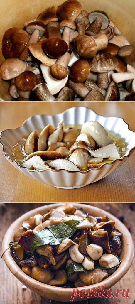 Подборка вкусных рецептов маринования белых грибов на зиму