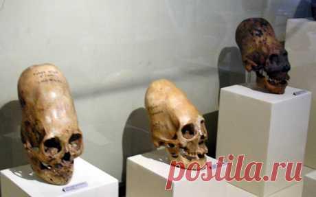 Результаты анализа ДНК черепов Паракаса шокировали ученых  