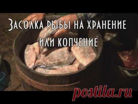 🐟 Холодное копчение рыбы. Часть 2.1 Засолка щуки и карася 🐠