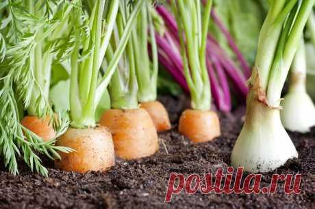 Секреты совместной посадки овощей — informed news 24