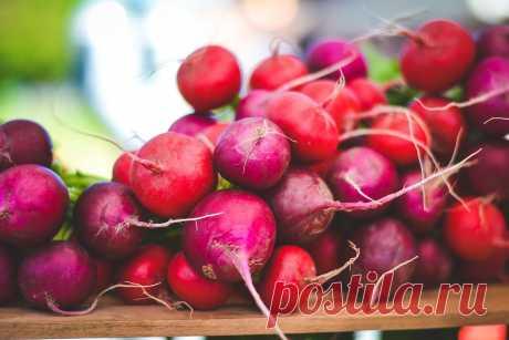 Лучшие сорта редиса для открытого грунта и теплиц: белый редис, всесезонный и другие Статья про лучшие сорта редиски для открытого грунта и теплиц. Как выбрать хороший сорт редиса, разновидности овоща по цвету и форме: фиолетовый, красный и белый редис, длинная, крупная и желтая редиска, всесезонный редис, а также голландские сорта овоща