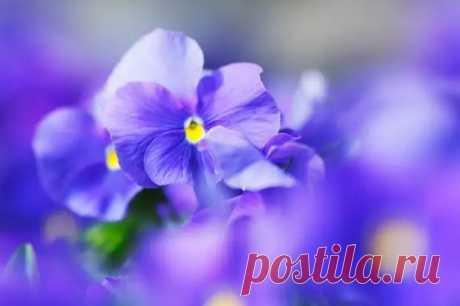 Цветы, которые забирают женское счастье - Гороскоп - медиаплатформа МирТесен